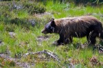 Where the Wild Things Are: Black Bears